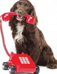 Hond contact