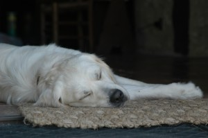 dog-sleeping-1404568